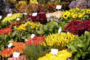 mercato fiori esposizione pescia il tuo paese
