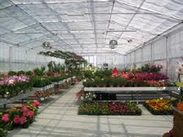 serra vivaio piante fiori Pescia il tuo paese