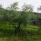 mura parte nord occidentale pescia